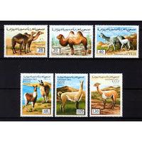 1996 Сахара. Ламы и верблюды