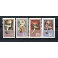 Сискей (Южная Африка) - 1988 - Грибы - [Mi. 145-148] - полная серия - 4 марки. MNH.