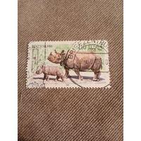 Германия 2001. Носороги