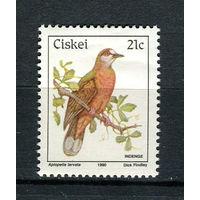 Сискей (Южная Африка) - 1990 - Птицы - [Mi. 174] - полная серия - 1 марка. MNH.