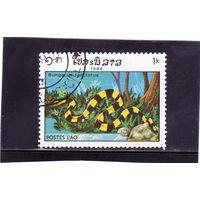 Лаос. Ми-774. Пластинчатый Krait (Bungarus fascitus). Серия: Рептилии.1984.