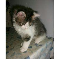 Маленькие пушистые источники радости В ДАР  Ласковые котята ищут себе новых добрых хозяев.