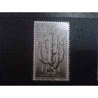 Ифни 1956 Колония Испании растение