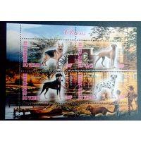 Чад 2103 Фауна Домашние питомцы Собаки