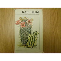 Турдиев С.Седых Р.Эрихман В. Кактусы