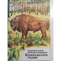 Прошлое и настоящее Беловежской пущи