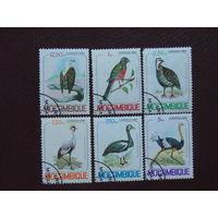 Мозамбик 1980г. Птицы.