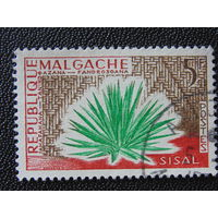 Мадагаскар.  Флора.