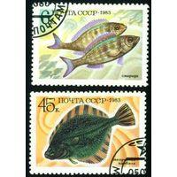 Промысловые рыбы СССР 1983 год 2 марки