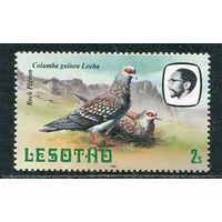 Лесото. Птицы. Крапчатый голубь