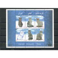 Иран. Коты. Блок