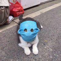 Марлевая повязка для кота