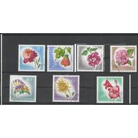 Албания флора цветы 1967г   (С)