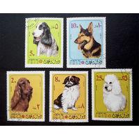 Оман. Собаки. Фауна, 5 марок #0163-Ф1
