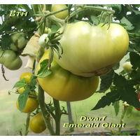 Семена томата Dwarf Emerald Giant
