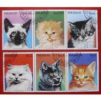 Парагвай. Кошки. ( 6 марок ) 1984 года.