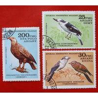 Мадагаскар. Птицы. ( 3 марки ) 1982 года.