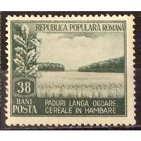 Экология Охрана природы Лес 1953 Румыния **