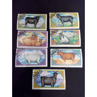 Монголия. 1988 г. Фауна. Козлы (Goats), серия из 7 марок #0001-Ф1