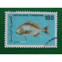 Тунис 1991г. Рыбы.