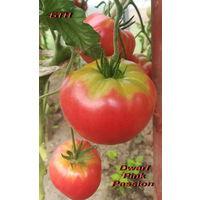 Семена томата Dwarf Pink Passion (Гном Розовая страсть)