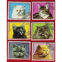 Парагвай 1982 Кошки