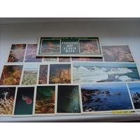 """Комплект открыток """"Подводный мир белого моря"""" 15 шт.1980 год"""