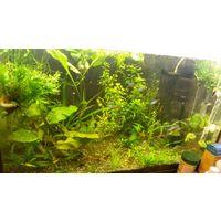 Аквариумное  растения