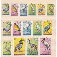 1965 Бурунди Птицы Фауна  (С)