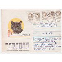 Конверт СССР, прошедший почту. Британская голубая кошка