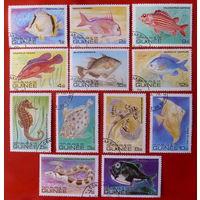 Гвинея. Рыбы. ( 12 марок ) 1979 года.