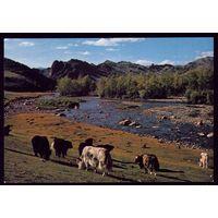 Монголия Река Богдын гол 2