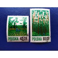 Польша 1971 год. Лес Лесное хозяйство