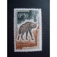 Мавритания. Mi:MR 204 - 1963 год (Полосатая гиена)