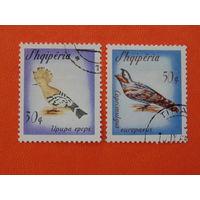 Албания 1966г. Птицы.