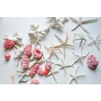 Морские звёзды и кораллы из Мальдив,  c 1 рубля за всё