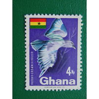 Гана. Птицы
