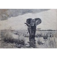 Индийский слонъ-отшельнникъ.  20х15 см. 1909 г.