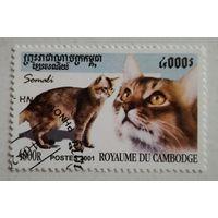 Камбоджа 2001. Кот