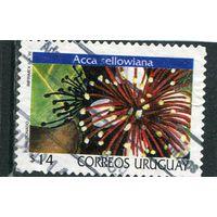 Уругвай. Цветок фейхоа