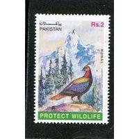 Пакистан. Гималайский монал, семейства фазановых