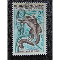 Мадагаскар.  Фауна.