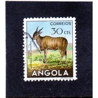 Ангола.Ми-371.Антилопа Эланд (Taurotragus Орикс). Серия: животные.1953.