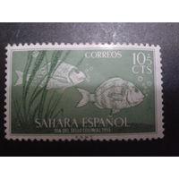 Сахара 1953 колония Испании рыбы