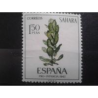 Сахара, колония Испании 1967 растение