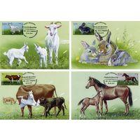 МОЛДОВА  2019 г Картмаксимум Фауна Домашние животные Лошадь Коза Кролик Корова4 КМ
