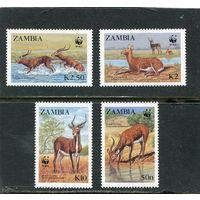 Замбия. Фауна. Водный козел