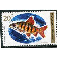 Руанда. Рыба