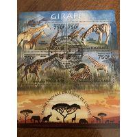 Того 2013. Жирафы. Малый лист
