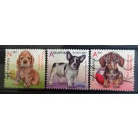 Беларусь щенки 3 марочки